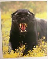 Black Panther Poster 1987 Scowling Cat Lithograph Print Impact #5467 Wall Art