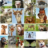 LUSTIGE TIERE (Set 6): 20-er Tierpostkarten-Set / 20 verschiedene Ansichtskarten