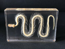 Skeleton of a Snake - Articulated - Specimen Display - Taxidermy