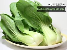 RARE✿ Authentic Shanghai GREEN Stem Bok Choy/Pak Choi Seeds 100+ Non-hybrid