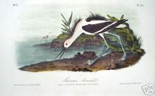 "John James Audubon: ""American Avocet"" Original Litho."