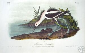 "John James Audubon: ""American Avocet"" Original Litho."