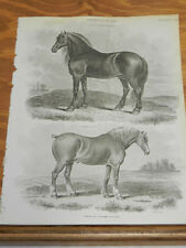 1824 Antique Print/FARM ANIMALS///BLACK CART HORSE AND SUFFOLK PUNCH HORSE