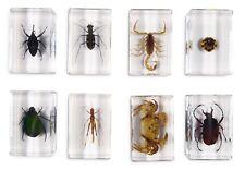 Insect Specimen Scorpion Crab Chafer Tiger Antler Horned Beetle Weevil Locust