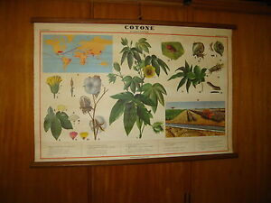 ITALY VALLARDI BOTANICAL COTTON CULTIVATION SCHOOL MAP MAPPA CARTE KARTE1960s