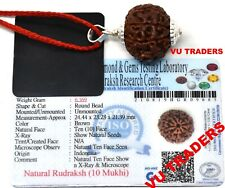 10 Mukhi Rudraksha / Ten Face Rudraksh Java Bead Lab Certified Size 24.44 MM