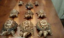 """Wades Collectables """"The Tortoise Range"""" 1956-1988. Nine in Total."""