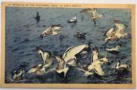 Seagulls Of the California Coast At Santa Monica Linen Postcard 1936 Vintage