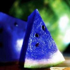 10pcs Rare Blue Watermelon Seeds Fruit Vegetables Organic Plant Seed Home Garden