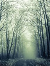 NATURE PHOTO FOREST TREES WINTER TRACK LARGE WALL ART PRINT POSTER LF2053