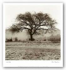 ART PRINT Willow Tree Alan Blaustein 12x12