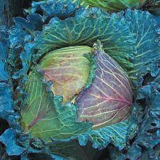 Vegetal Col ENERO REY 1600 Semillas