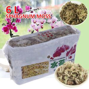 ❤ 6L Garden Sphagnum Moss Dried Moisturizing Fertilizer Phalaenopsis Orchid