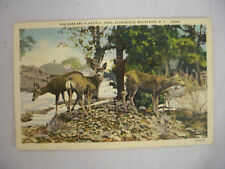 Vintage Linen Postcard Family Of Deer In The Adirondack Mountains New York 1939
