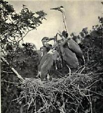 Wild Life In The Tree Tops Book CD 1921 many photos birds