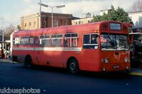 London Transport SMS771 Golders Green 1980 Bus Photo