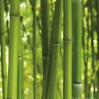 Bamboo - Stalks Plants Forest Poster Art Print (16x16in) #61551