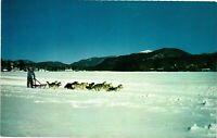 Vintage Postcard - Mushing and Dog Sled Races Lake Placid New York NY #1728