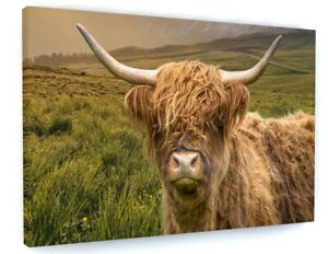 HIGHLAND COW ANIMAL CANVAS PICTURE PRINT WALL ART D567