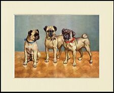 PUG THREE LITTLE DOGS LOVELY DOG PRINT MOUNTED READY TO FRAME