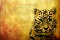A1 | Wild Leopard Poster Art Print 60 x 90cm 180gsm Big Cat Animal Gift #8241