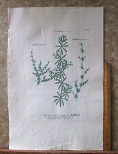 "Vintage Engraving,APARINE,Bedstraw,C.1740,WEINMANN,Botanical,20x13.5"",Mezzotint"