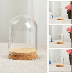 Glasglocke Glashaube Glassturz Holzteller Hochzeit Sukkulenten Dekor Glaskuppel