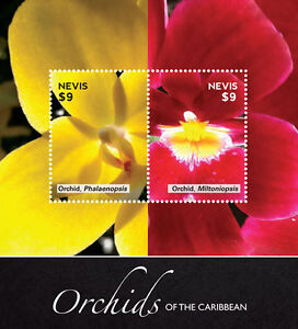 Nevis-2014-Orchids of Caribbean