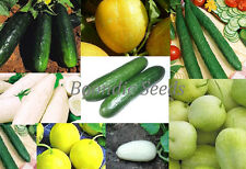 CUCUMBER 'Heirloom Mix' 15 seeds UNUSUAL vegetable garden mixture NON GMO easy