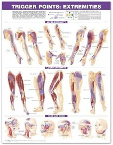TRIGGER POINT EXTREMITIES PAPER POSTER (66X51CM) ANATOMICAL CHART NEW EDUCATION
