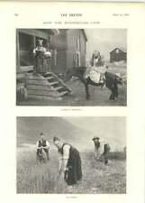 1899 The Work Of The Coast Guard How The Norwegians Live Harvesting Horseback
