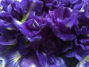 Tea Butterfly Pea Blue Flower Dried Natural Organic 100% Pure Drink Herbal 100g