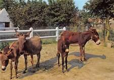 Belgium Meli Park Adinkerke De Panne, Donkeys with Youngs Ezels met Jongen