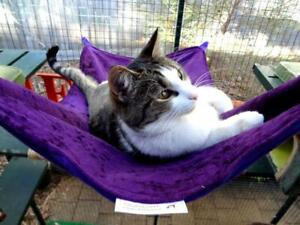 LUXURICAT HAMMOCK, PURPLE & PINK REVERSIBLE, CAT BED, CAT LOUNGER