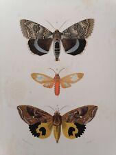 Orbigny Gravure Sur Acier XIXème Lépidoptères Ophidére Blanchard pinx 1849
