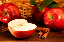 Apple Cinnamon Type Soap / Candle Making Fragrance Oil 1 - 16 Ounce