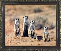 African Meerkats Suricata Suricatta Wildlife Animal Wall Decor Framed Picture