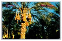 Indio, CA California, Greetings From, The Date Palm Trees Empire, Postcard