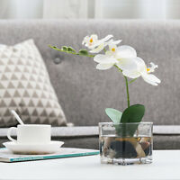 MyGift Mini White Faux Silk Phalaenopsis Orchid Flower in Square Glass Vase