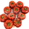 DRIED MINI PUMPKIN SOLANUM WHOLE FRUIT HALLOWEEN CHRISTMAS CRAFT WREATH FLORIST