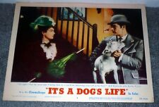 Bull Terrier/Jeff Richards orig 1955 movie lobby card poster It'S A Dog'S Life