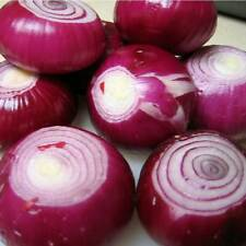 ONION Tanami Red Seeds (V 479)