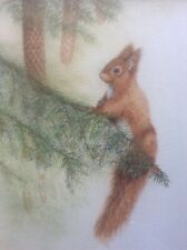 More details for original jennifer bell wildlife watercolour painting of red squirrel & fir cones