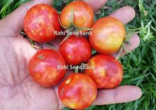 Solar Flare Cherry Tomato - A Gorgeous Red Cherry Type Tomato - 10 Seeds!!!
