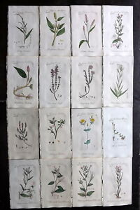 Sowerby C1800 Lot of 16 Hand Col Botanical Prints, Flowering Plants, Book Plates