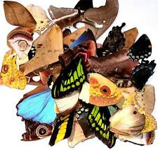 BUTTERFLY/MOTH/UNMOUNTED BIN Great Variety Artwork Jewelry Lot of 50 WINGS