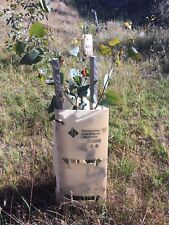Tree and Plant Guards (Aust Made) EARTH  20 pieces Inc 20 Stakes and ties