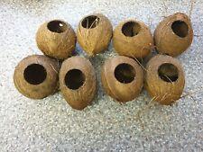 reptile coconut hide whole
