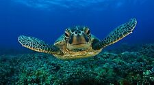 "Sea Turtle Crush Animals- 42"" x 24"" LARGE WALL POSTER PRINT NEW."