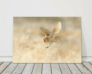 hunting barn owl in flight canvas picture print nature landing in grass